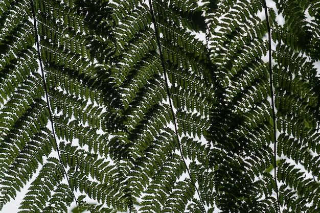 Niski kąt widzenia liści paproci strusia na gałęziach w świetle słonecznym
