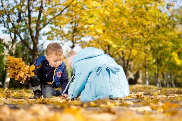 Niski kąt widzenia młodego brata i siostry, klęczących na ziemi w lesie, grających w kolorowe żółte jesienne lub jesienne liście
