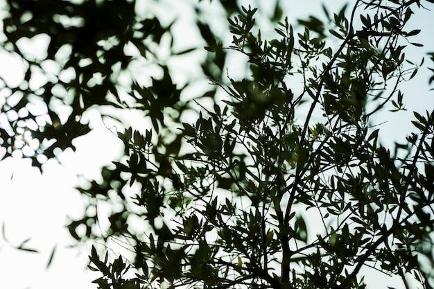 Niski kąt widzenia sylwetki gałęzi drzew