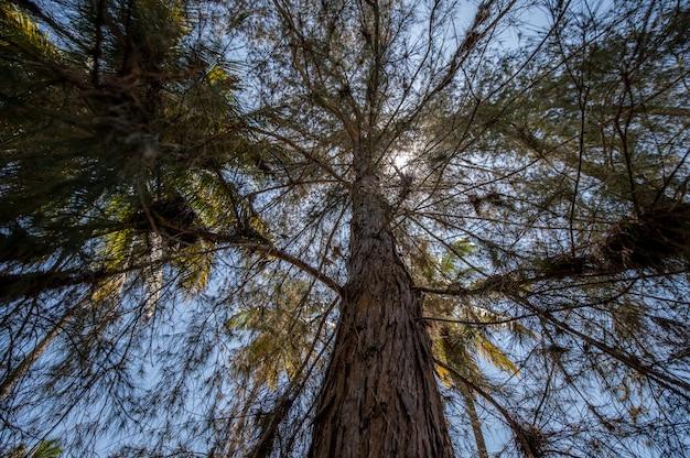 Niski kąt widzenia wysokiego drzewa z zielonymi liśćmi pod jasnym niebem