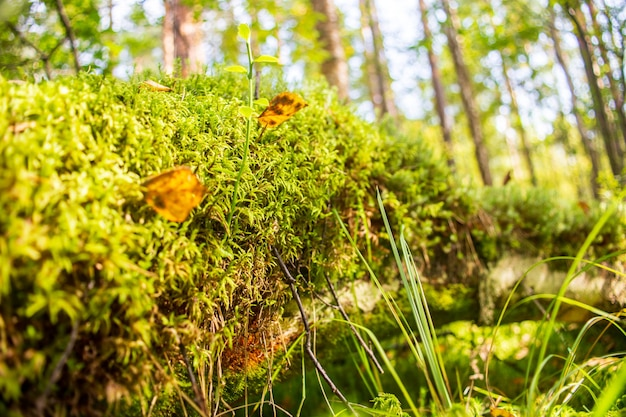 Niski punkt widzenia w krajobrazie przyrody. niewyraźne miejsca kopiowania tle przyrody. środowisko ekologiczne