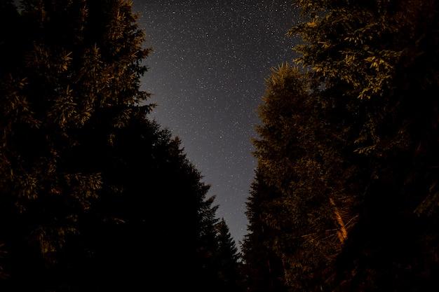 Niski widok pięknych drzew i nieba
