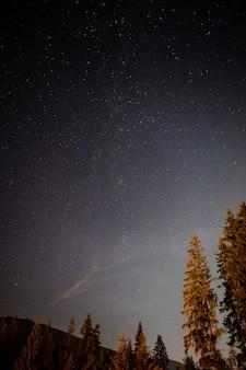 Niski widok strzelał drzewa w nocy