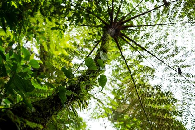 Niskiego kąta widok drzewo w tropikalnym tropikalnym lesie deszczowym przy costa rica