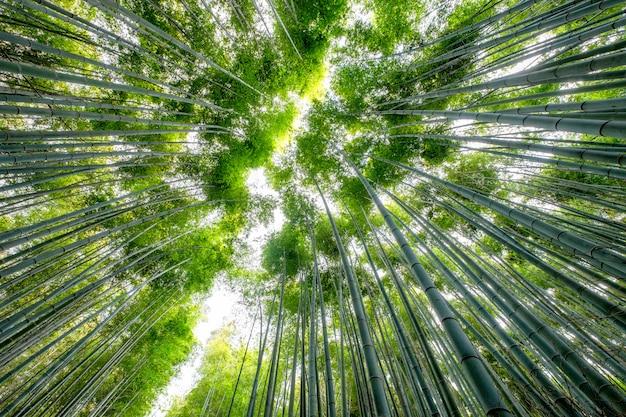 Niskiego kąta widoku piękny zielony bambusowy las