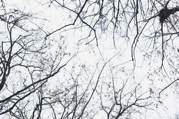 Niskiego kąta widoku sylwetki naga gałąź w zima dniu