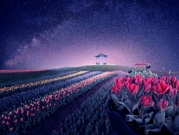 Nocleg w parku tulipanów. gwiaździste niebo nad ogromnymi kolorowymi plantacjami tulipanów.