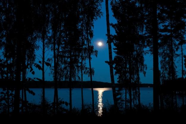 Nocny krajobraz jeziora leśnego z odbiciem moonbeam w wodzie