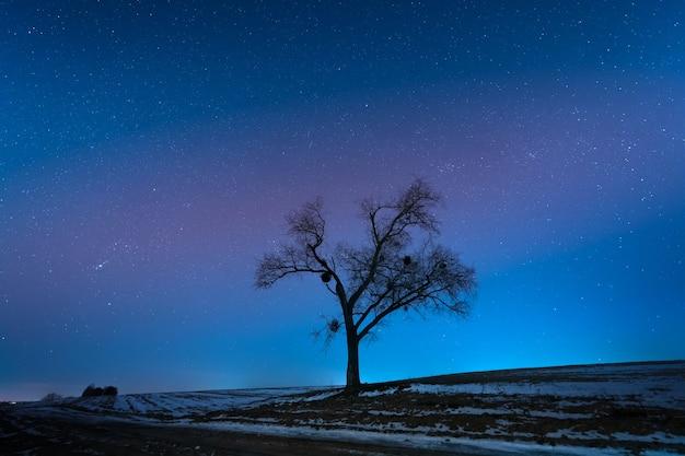 Nocny krajobraz, samotne wielkie drzewo na tle rozgwieżdżonego nieba.