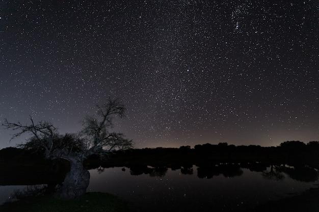 Nocny krajobraz w lagunie w pobliżu arroyo de la luz. extremadura. hiszpania.