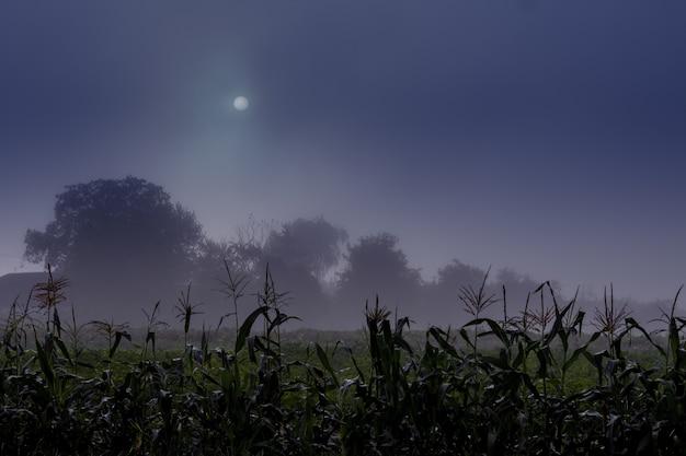Nocny krajobraz z księżycem na niebie