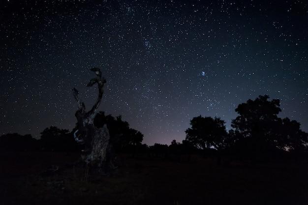 Nocny krajobraz ze spalonego drzewa.