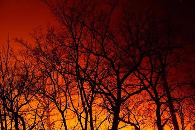 Nocny ogień w jesiennym lesie liściastym. tło