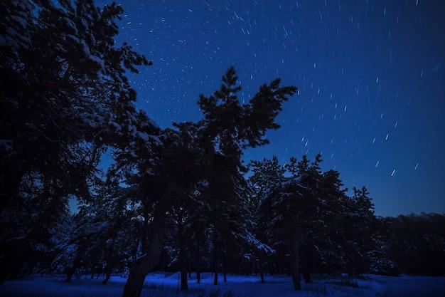 Nocny widok na gwiaździste niebo w zimowym lesie.