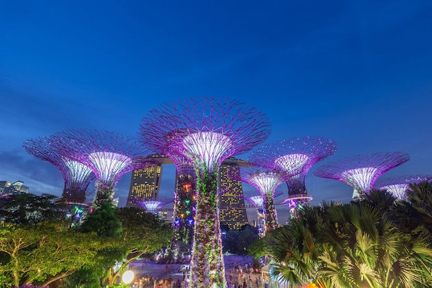 Nocny widok na super drzewa w garden rhapsody (ocbc light and sound show) w gardens by the bay w singapurze.