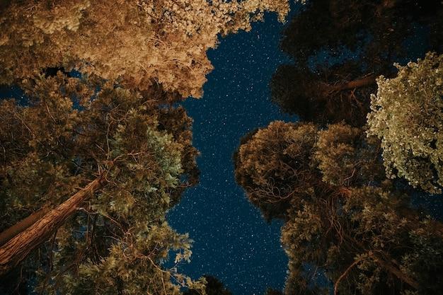 Nocny widok wierzchołków drzew w parku narodowym yosemite, stany zjednoczone