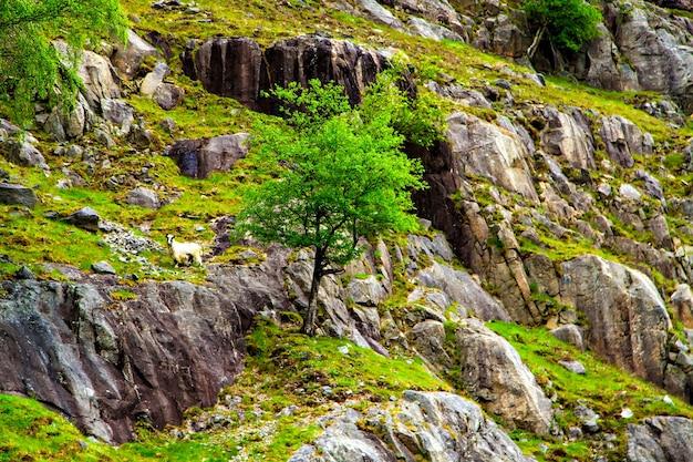 Norweski krajobraz: wysokie klify i drzewa