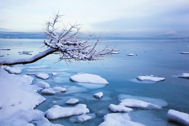Norweski zimowy krajobraz fiordu z drzewem i lodem