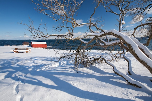 Norweski zimowy krajobraz fiordu z drzewem