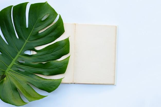 Notatnik z zielonymi liśćmi na białym tle