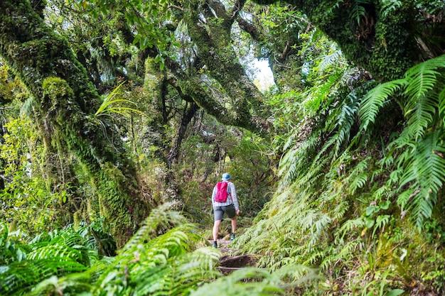 Nowa zelandia tropikalny las dżungli.