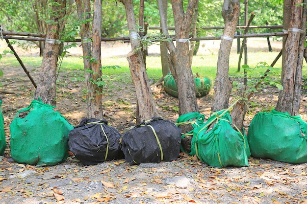 Nowe drzewa czekające na sadzenie w ogrodzie. owiń korzeń, aby zmniejszyć brak wody.