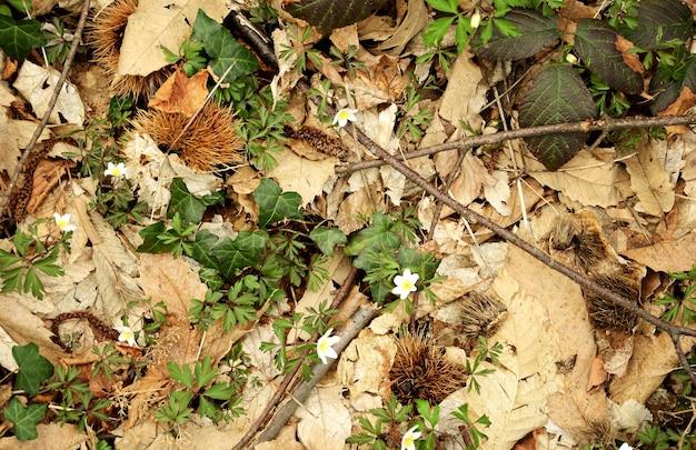 Nowe rośliny na tle opadłych liści w lesie