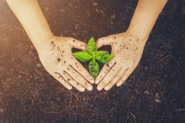 Nowe życie młodych sadzonek roślin rośnie w czarnej glebie