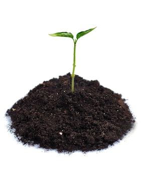 Nowe życie - zielone kiełki z gleby, na białym tle