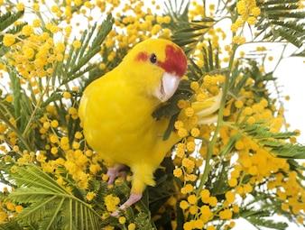 Nowej Zelandii papugi