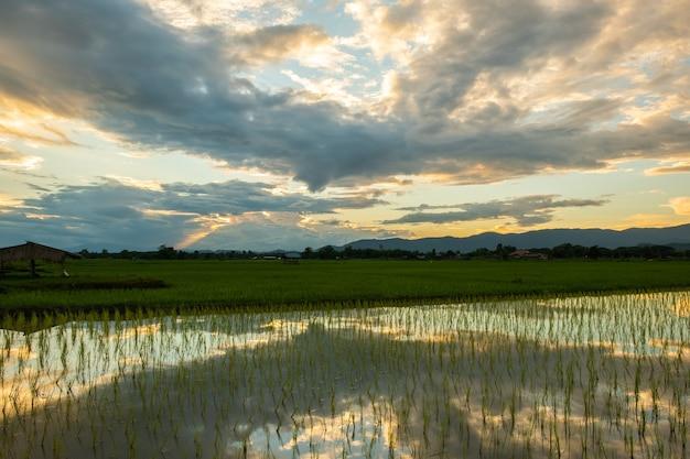 Nowo posadzone pola ryżowe i stare chaty. wiejskie pola na wsi.