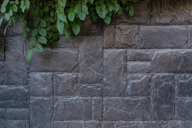 Nowoczesne kamienne ceglane ściany tła z zieloną rośliną. tekstura kamienia z miejsca na kopię
