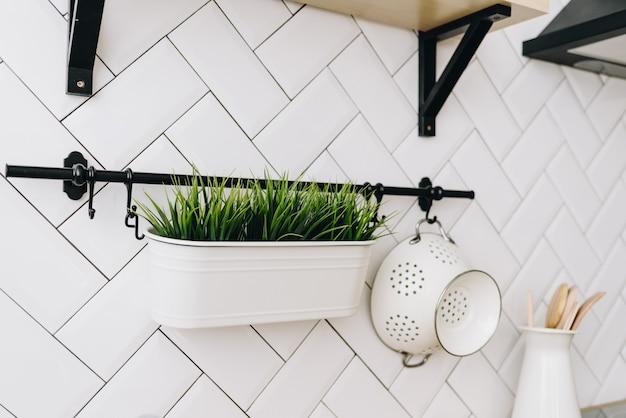 Nowoczesne Wiecznie Zielone Rośliny Doniczkowe Stosowane W Dekoracji Wnętrz Premium Zdjęcia