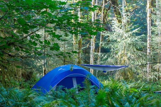 Nowoczesny namiot turystyczny wiszący między drzewami w zielonym lesie