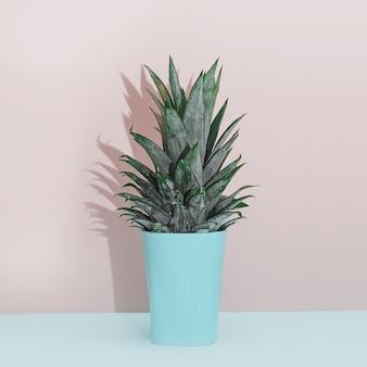 Nowoczesny wystrój domu tropikalna roślina. kaktus na różowym błękitnym tle. minimalizm płaski lay.