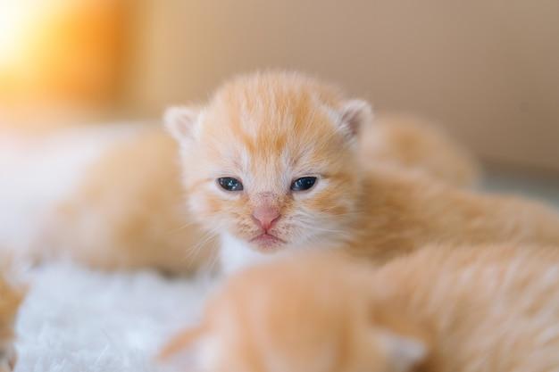 Noworodek czerwony kot śpi selektywne skupienie