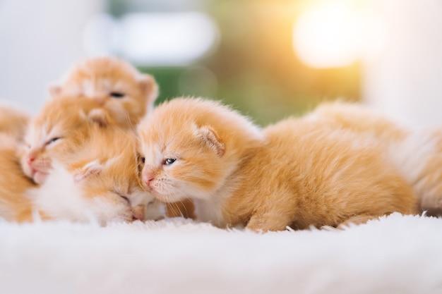 Noworodek czerwony kot śpiący na zabawnej pozie grupa małych uroczych kociaków imbirowych zwierzę domowe sen i przytulny czas drzemki wygodne zwierzęta spać w przytulnym domu selektywne skupienie