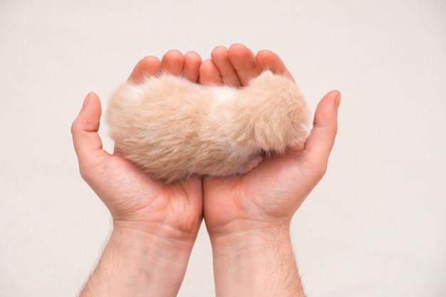 Noworodka kotek na rękę. samodzielnie na białej ścianie