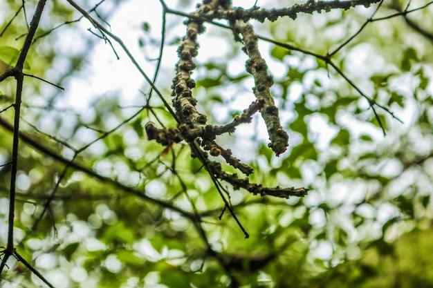 Nowy gałązek pąków rosnących na zielono