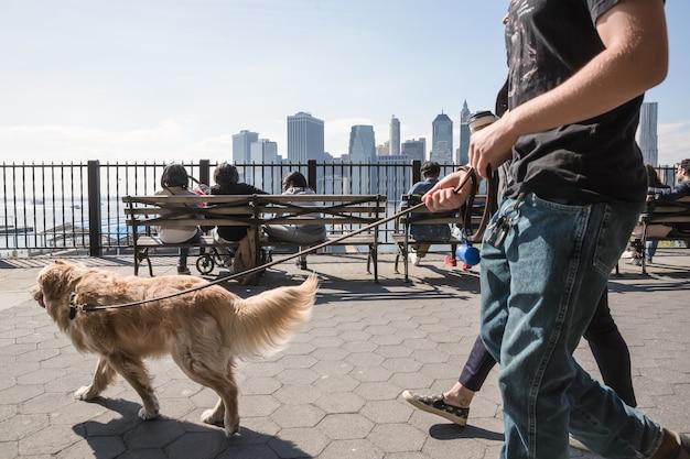 Nowy jork, stany zjednoczone ameryki - 27 kwietnia 2016: grupa młodych ludzi chodzących z psem na promenadzie brooklyn heights. ludzie odpoczywają i podziwiają wspaniałe widoki na manhattan