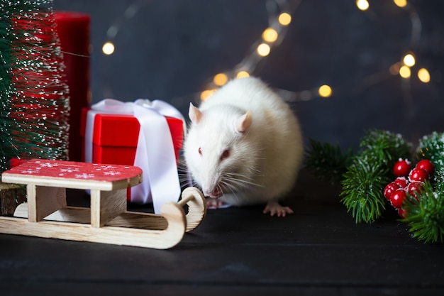 Nowy rok . śliczny domowy szczur w noworocznym wystroju. symbolem roku 2020 jest szczur.
