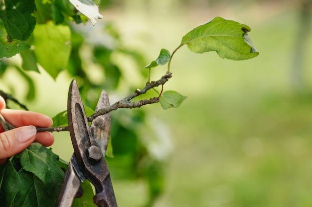 Nożyce ogrodowe odciąć ogród, zbliżenie nożyczek, miejsce