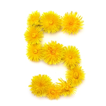 Numer 5 jasnożółtych kwiatów mniszka lekarskiego, izolować na białym tle