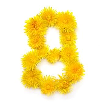 Numer 8 jasnożółtych kwiatów mniszka lekarskiego, izolować na białym tle