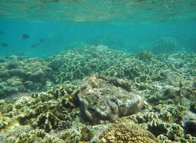 Nurkowanie na wyspie socotra, ocean indyjski, jemen