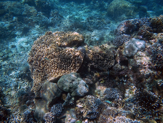 Nurkowanie z rurką, wyspa bali, indonezja