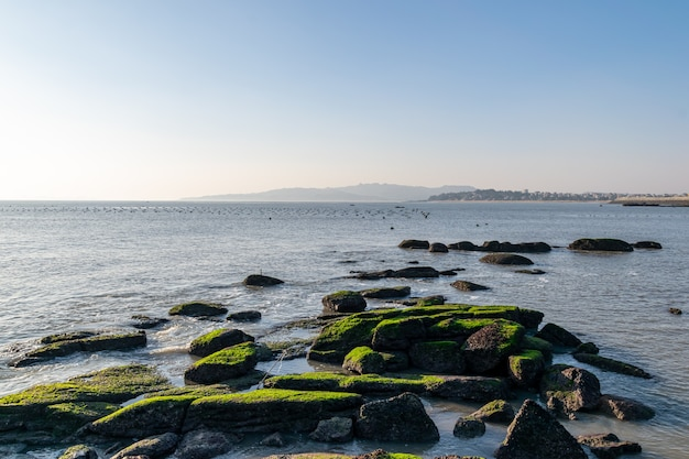 O zmierzchu rafa na plaży pokryta jest zielonymi glonami, a kolor jest bardzo piękny