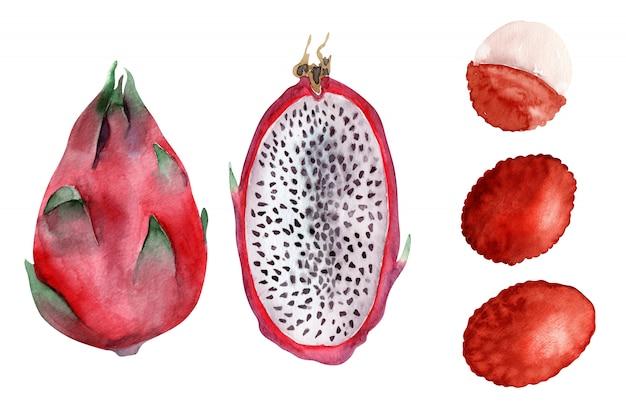 Obiekty akwarelowe jasne egzotyczne owoce