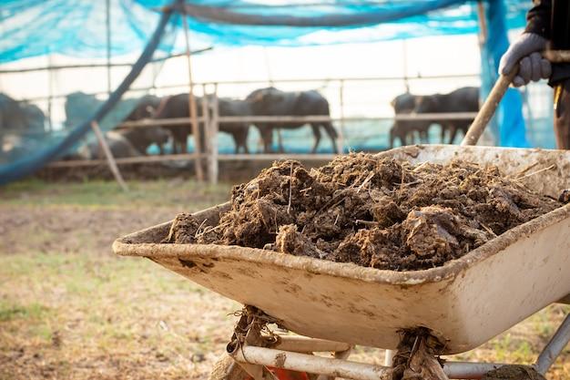 Obornik lub obornik krowie do uprawy i rolnictwa.