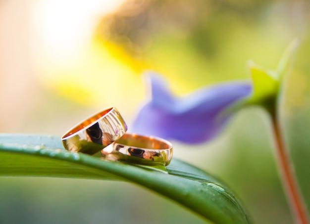 Obrączki ślubne na zielonej doniczce z fioletowym kwiatkiem
